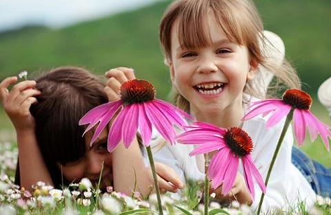 Применение эхинацеи для детей