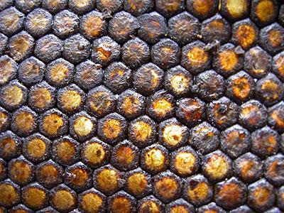 Как принимать мёд с прополисом?